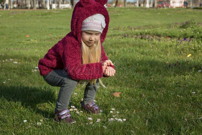 Meisje die bloemen op eerste de lentedag verzamelen royalty-vrije stock foto