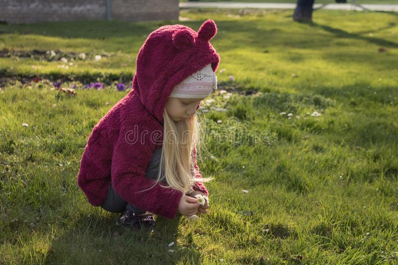 Meisje die bloemen op eerste de lentedag verzamelen stock afbeeldingen