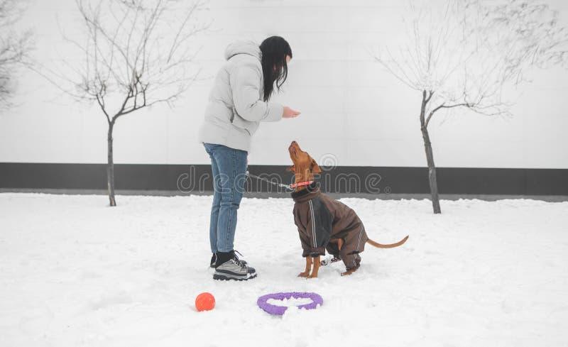 Meisje die de winterkleren op een hond voor een leiband dragen, die in de winter door de straat lopen royalty-vrije stock foto's