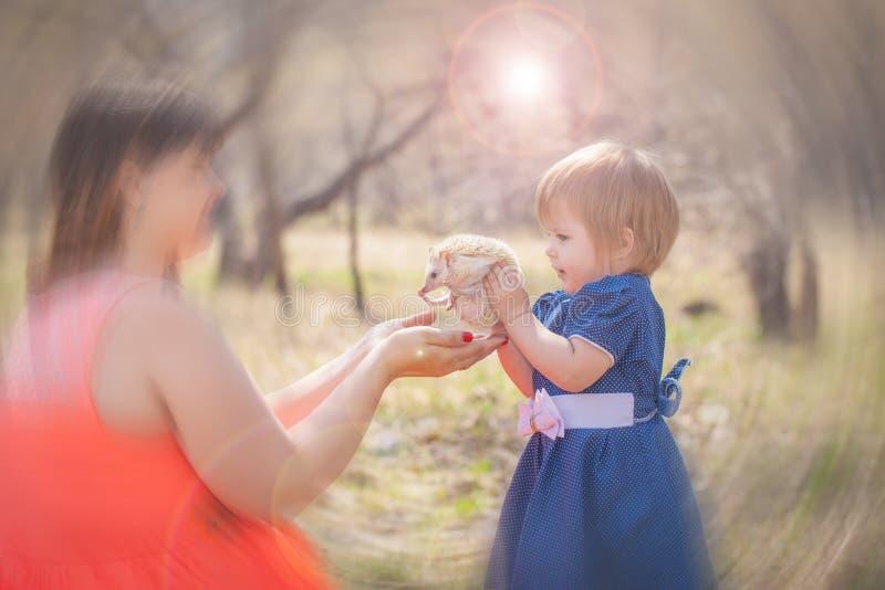 Meisje die een egel houden De kindspelen met het dier royalty-vrije stock foto