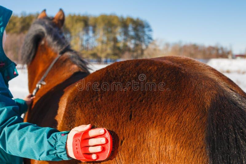 Meisje die een paard met stof en stoppelveld op een zonnige dag borstelen stock fotografie