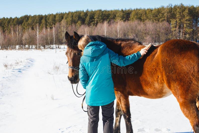 Meisje die een paard met stof en stoppelveld op een zonnige dag borstelen stock foto