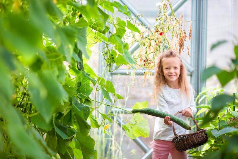 Meisje die gewassenkomkommers en tomaten in serre verzamelen stock foto's