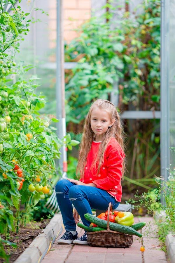 Meisje die gewassenkomkommers en tomaten in serre verzamelen Portret van jong geitje met groot busket binnen hoogtepunt van groen royalty-vrije stock fotografie