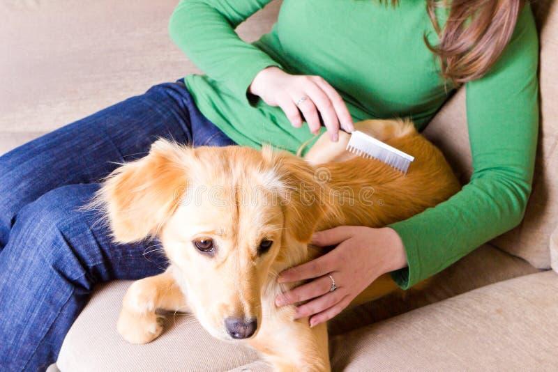 Meisje die haar hond kammen royalty-vrije stock foto's