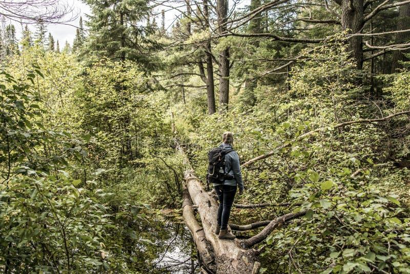 Meisje die in het Meer van Canada Ontario van twee rivieren natuurlijk wild landschap dichtbij het water in Algonquin Nationaal P stock fotografie