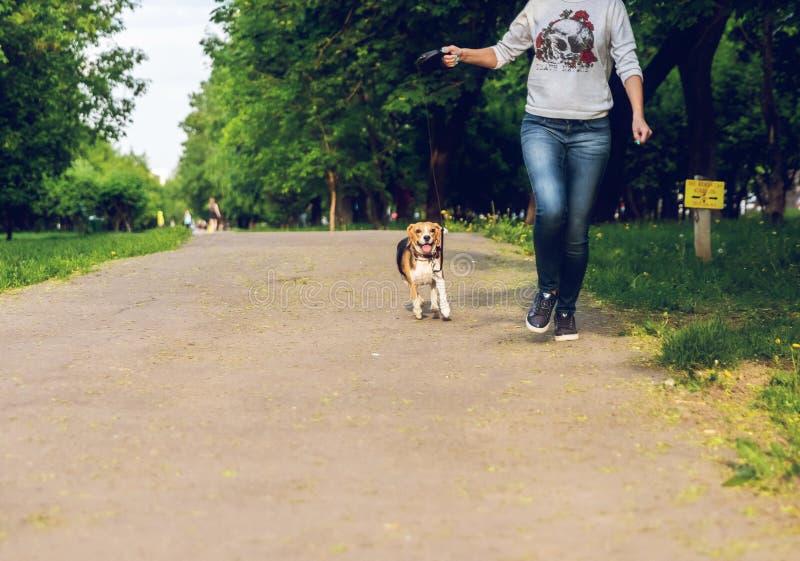 Meisje die met haar leuke vrouwelijke brakhond in het park in de zomertijd lopen Levensstijlfoto royalty-vrije stock afbeeldingen