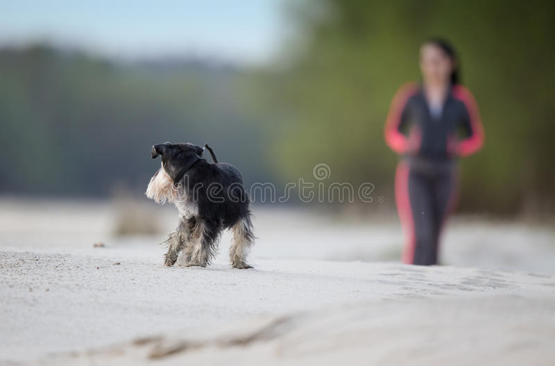 Meisje die met hond op het strand lopen royalty-vrije stock foto