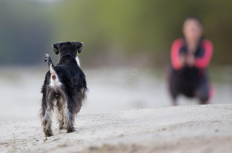 Meisje die met hond op het strand lopen stock afbeelding