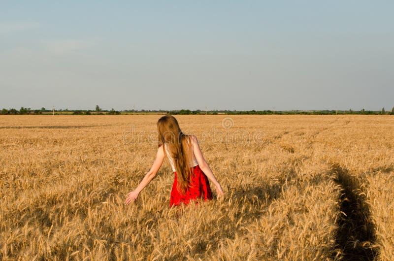 Meisje die in rode rok op tarwegebied lopen, handen wat betreft oren, achtermening royalty-vrije stock foto
