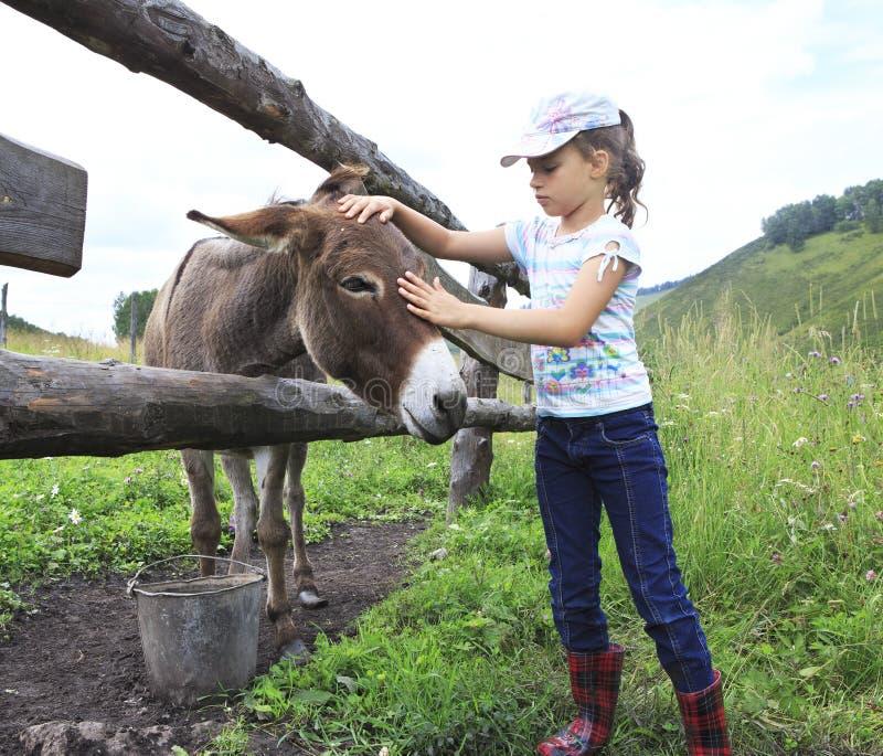 Meisje die teder een ezel strijken. stock foto's