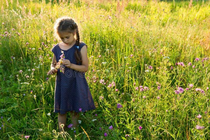Meisje die wilde bloemen op een gebied plukken royalty-vrije stock foto's