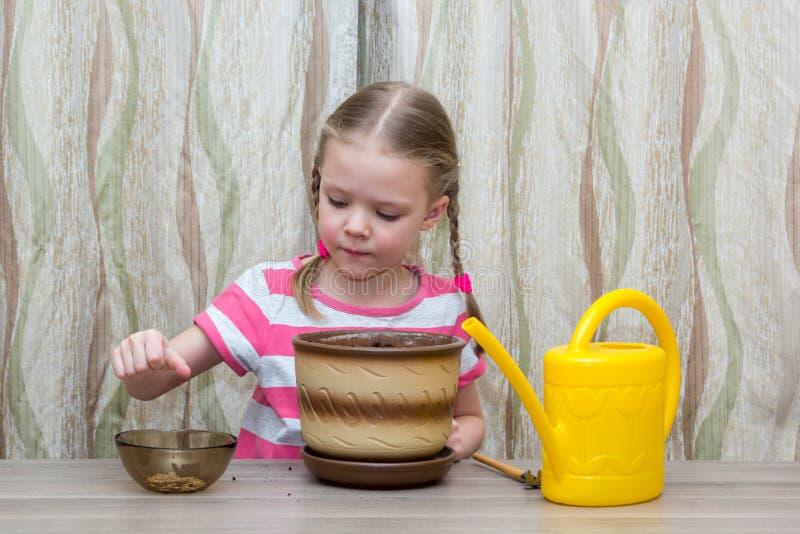 Meisje die zaden in een pot planten bij lijst stock afbeelding