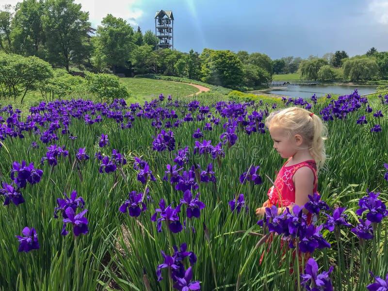 Meisje die zich op een gebied van purpere irissen bevinden royalty-vrije stock afbeeldingen