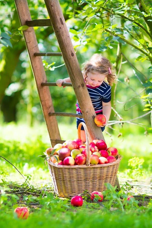 Meisje in een appeltuin stock afbeeldingen