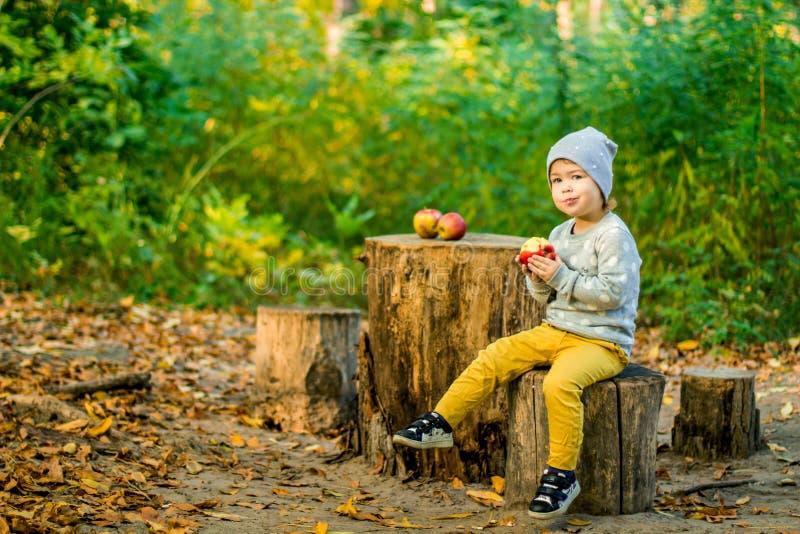 Meisje en de Herfst appelen nave stock afbeeldingen