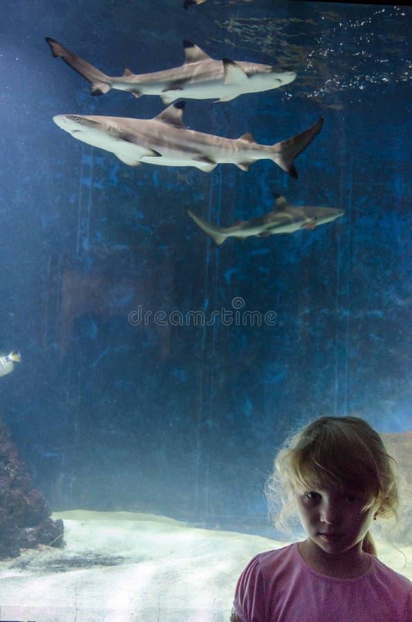 Meisje en haai in aquarium royalty-vrije stock afbeeldingen