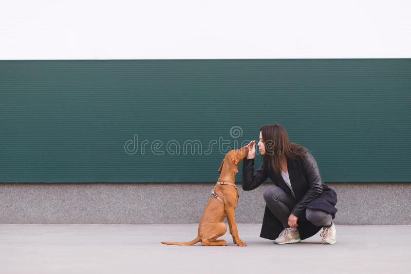 Meisje en hondzitting tegen de muur en het leuke spelen De liefde is de eigenaar en het puppy Vrije tijd met een huisdier stock fotografie
