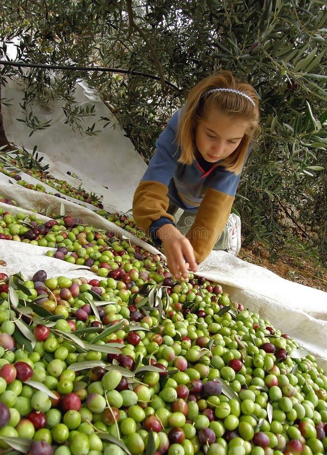 Meisje en olijven stock fotografie