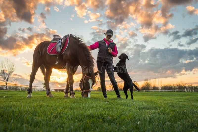 Meisje en paard stock afbeelding