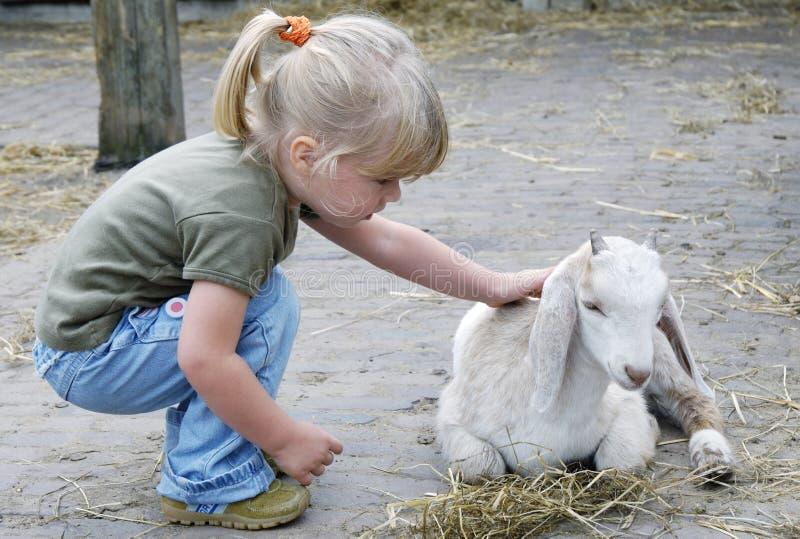 Meisje en weinig geit - close-up stock fotografie
