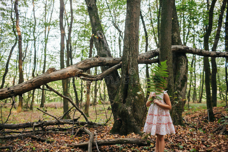 Meisje in het bos met varens stock afbeelding
