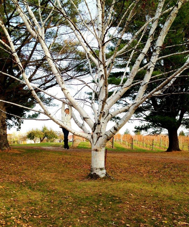 Meisje het hangen van boom in wit wordt gecamoufleerd dat royalty-vrije stock afbeeldingen