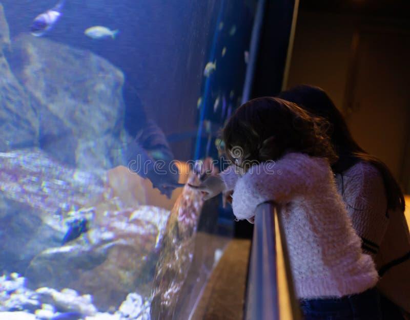 Meisje het letten op vissen in een groot aquarium stock foto's