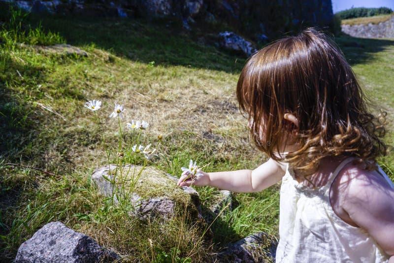 Meisje het plukken bloem royalty-vrije stock afbeelding