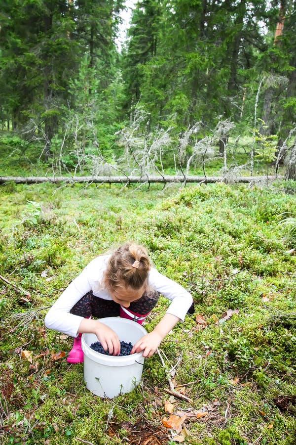 Meisje het plukken bosbessen in de zomerbos stock foto