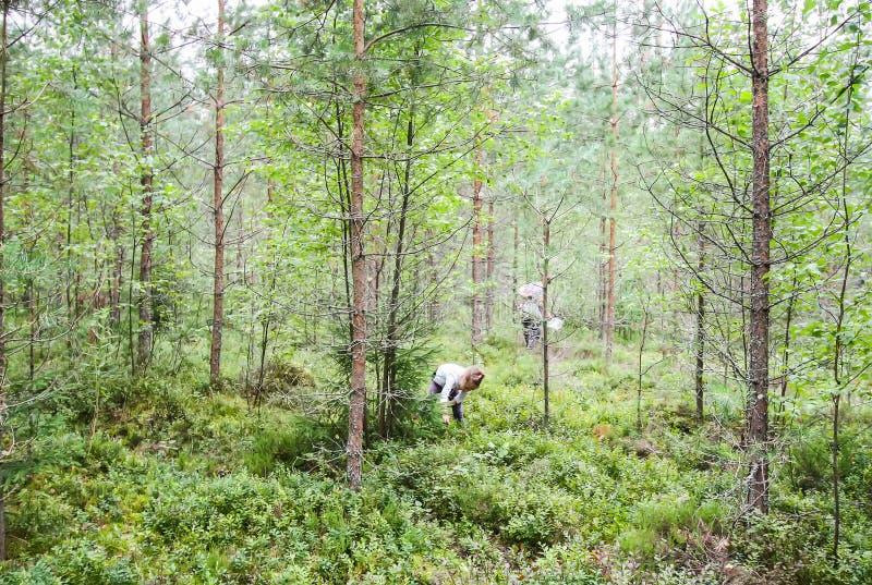 Meisje het plukken bosbessen in de zomerbos royalty-vrije stock foto
