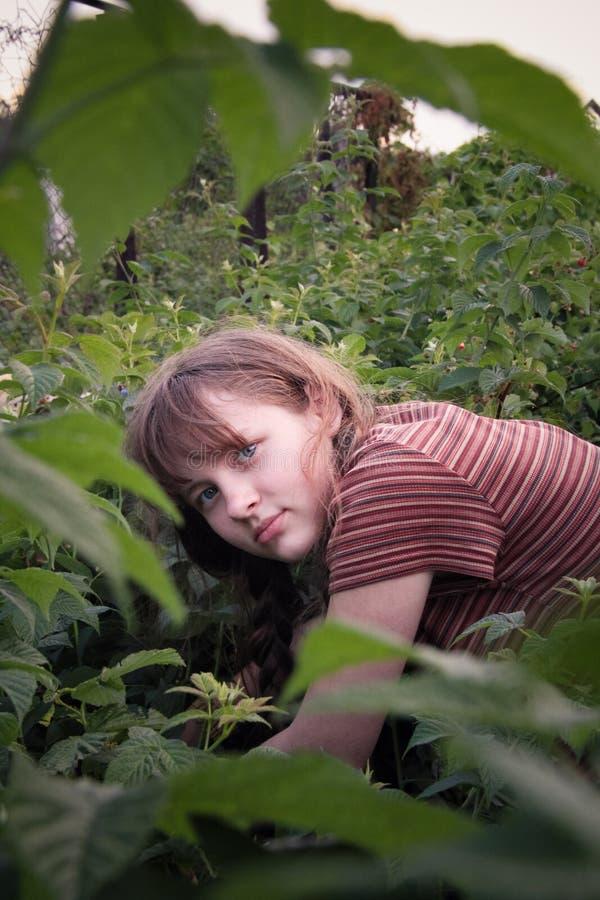 Meisje het plukken frambozen royalty-vrije stock fotografie