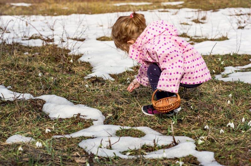 Meisje het plukken sneeuwklokjebloemen in de lente royalty-vrije stock foto's