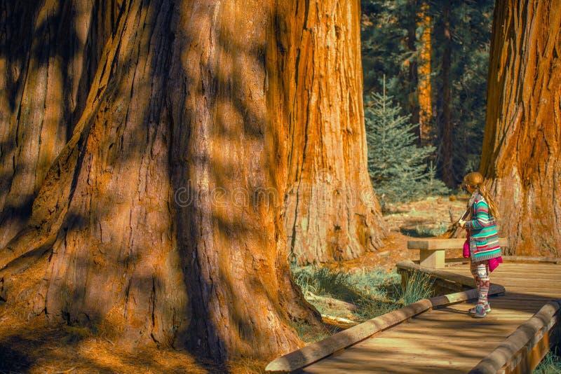 Meisje in het Sequoiabos royalty-vrije stock afbeeldingen