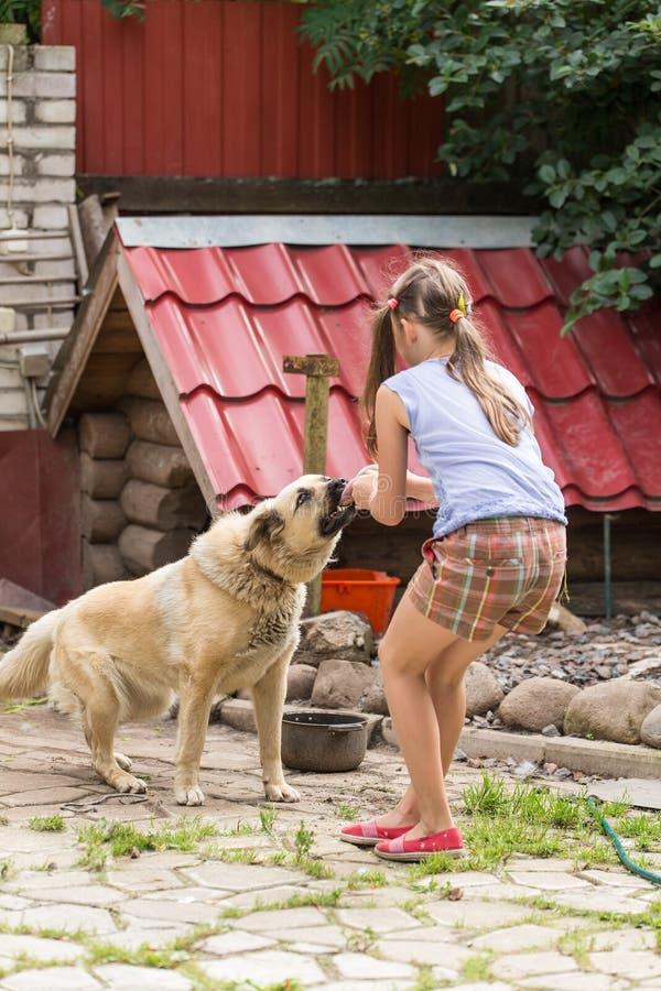 Meisje het spelen met de hond royalty-vrije stock fotografie