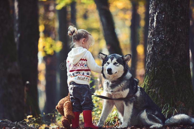 Meisje het spelen met hond in de herfstbos stock afbeeldingen