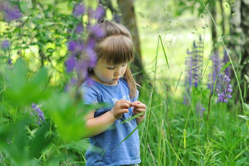 Meisje het spelen in zonnige bloeiende bospeuterkind het plukken lupinebloemen jonge geitjesspel in openlucht De zomerpret voor f stock foto