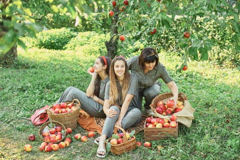 Meisje met Apple in de Apple-Boomgaard Mooi Meisje die Organisch Apple in de Boomgaard eten Het concept van de oogst De herfst ve stock foto