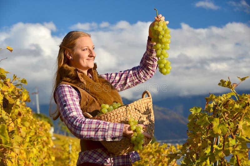 Meisje met een mandhoogtepunt van druiven stock afbeeldingen