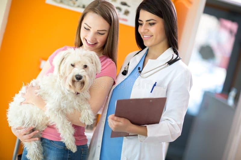 Meisje met haar Maltese hond en dierenarts bij ambulante dierenarts royalty-vrije stock foto