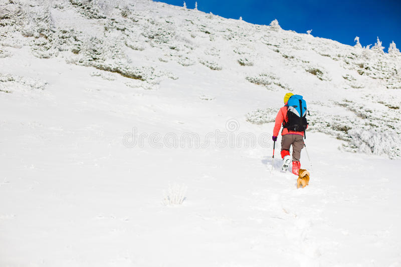 Meisje met hond in de winterbergen stock foto