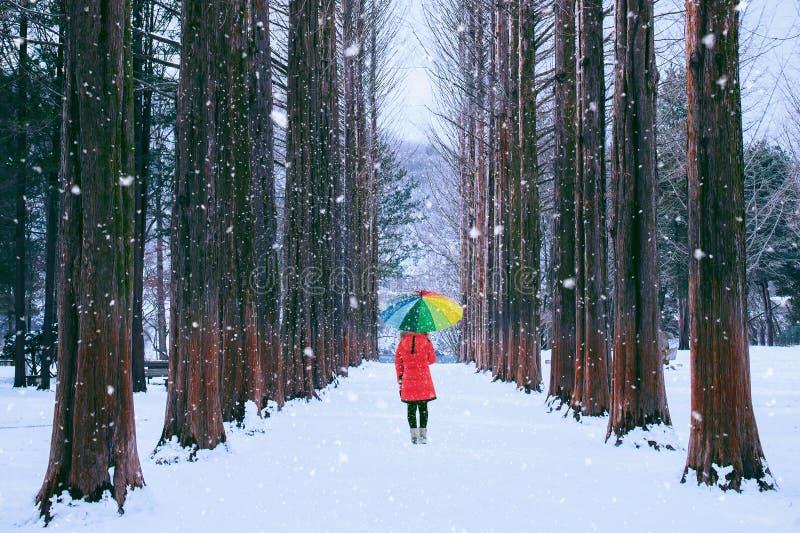 Meisje met kleurrijke paraplu in rijboom, Nami-eiland in Zuid-Korea De winter in Zuid-Korea stock afbeeldingen