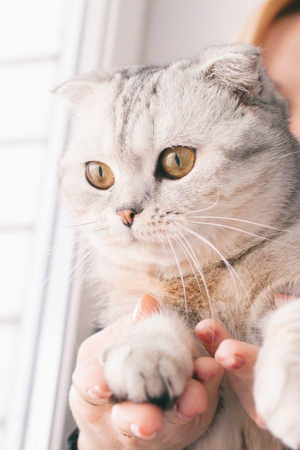 Meisje met roodharigenhaar het spelen met een grijze kat stock foto