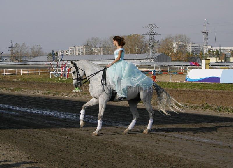Download Meisje op een paard stock afbeelding. Afbeelding bestaande uit blauw - 276095