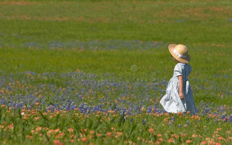 Meisje op gebied van bluebonnets stock afbeelding