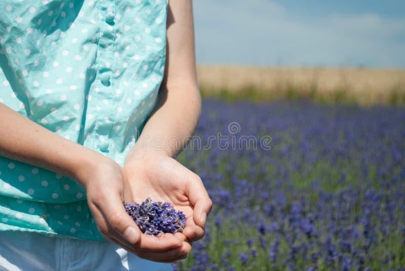 Meisje op lavendelgebied stock fotografie