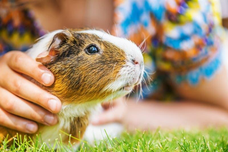 Meisje petting proefkonijn royalty-vrije stock foto