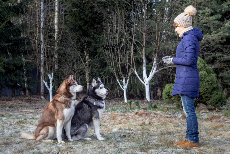 Meisje in winterkleding traint husky dogs in European Park Mistress leert de Siberische husky om het bevel te gehoorzamen om te g royalty-vrije stock fotografie