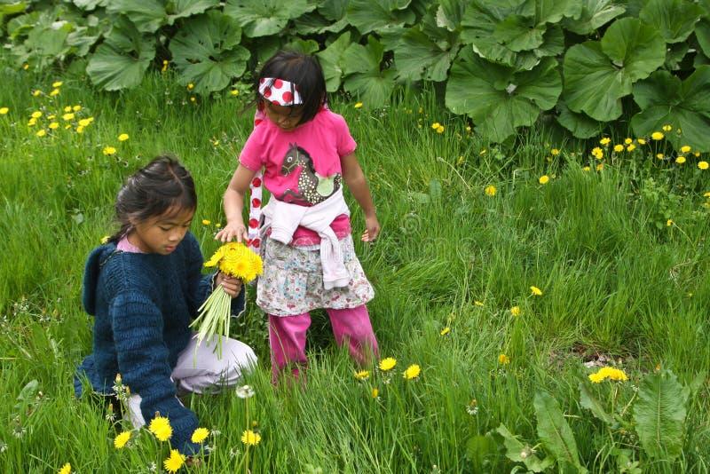 Meisjes die bloemen opnemen stock fotografie