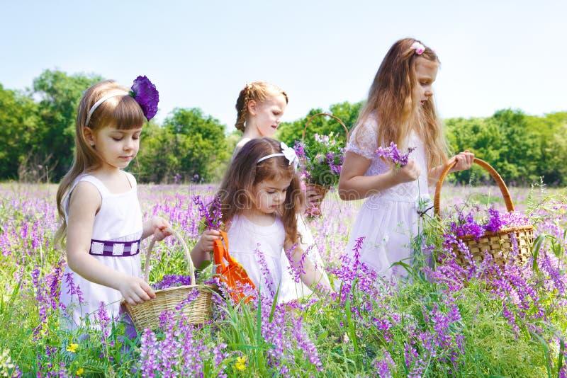 Meisjes die bloemen verzamelen stock afbeelding